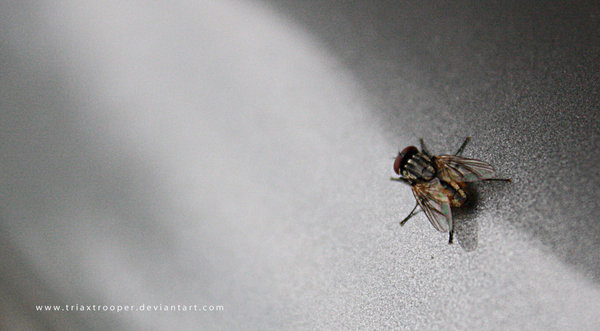 fly_on_the_wall_by_triaxtrooper